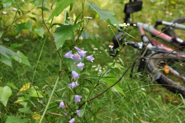 Забытый велик - велосипед в траве